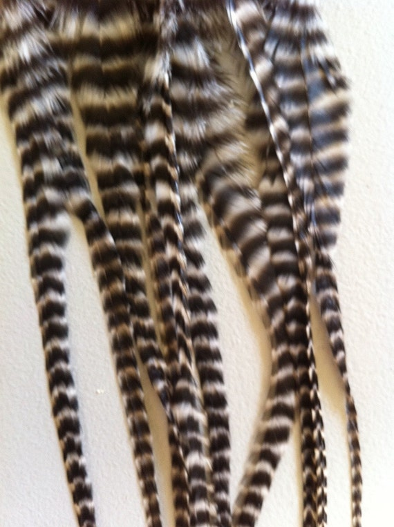 Grizzly feather extension 10 MEDIUM thick fat hair Natural Black And White Grizzly Rooster Saddle Feathers : Whiting Brand
