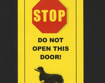 Dangerous Australian Shepherd Inside- Has Killed Squeaky Toy