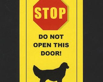 Dangerous Golden Retriever Inside - Has Killed Squeaky Toy