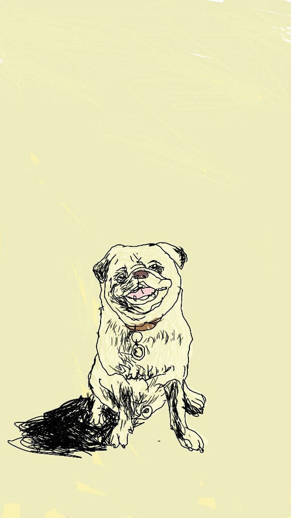 Pug - A framed print