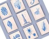 Set of 6 Prints, sea related theme. Lighthouse Print, Seashells, Argonauta,  Venus comb, Sea horse Nautical art