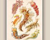 Sea creature Print, Nudibranchia Print, LARGE Vintage sea slugs illustration,  Marine Wall Decor,  Nautical art, Print 11'x14'