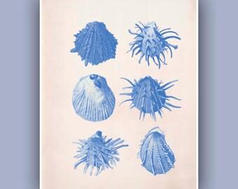 Seashell  Print,  Vintage Spondylus sea shell print,  Marine Wall Decor, Nautical art,  Mixed Media Collage  Print, Botanical Art