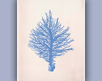 Coral Print 1 in blue,  Vintage sea fan image print, Blue Print, Antique sea life Wall Decor, Nautical art,  Collage  Print, Coastal Living