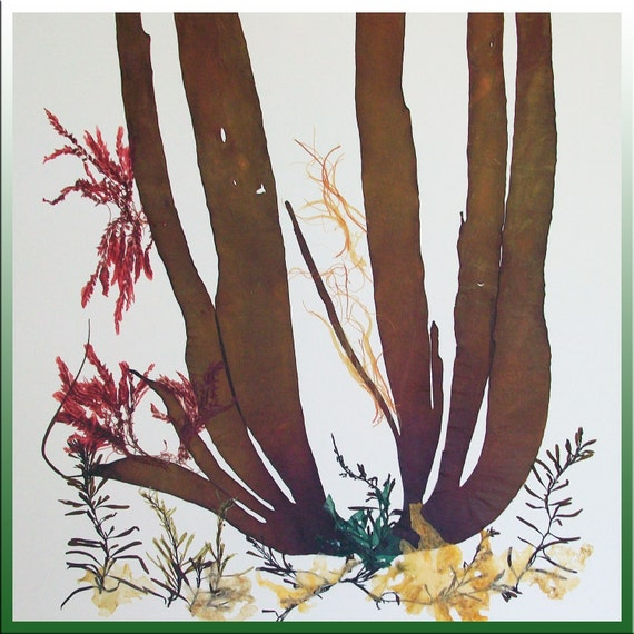 Kelp Seaweed Artwork, Alganet Original algae Collage 1506