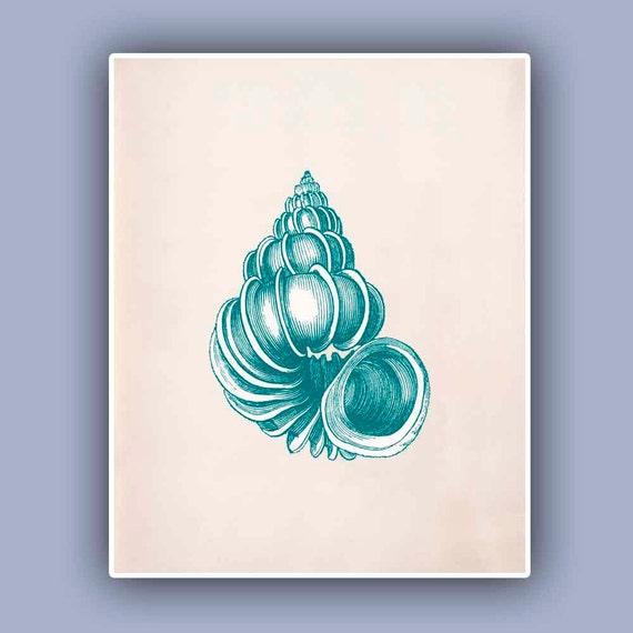 Wentletrap sea shell print in washed turquoise green print, Seashell  Print,  Marine Wall Decor, Nautical art,  Seashore  Print