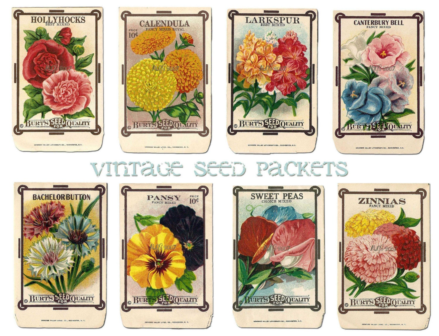 It's just a graphic of Clean Printable Seed Packets