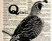 Quail - Print on Vintage Dictionary Page
