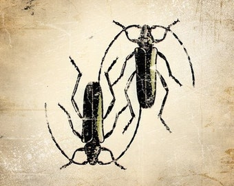 6x6 Insect Print - Musk Beetle