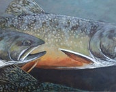 Spawning Brook Trout