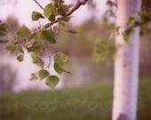 Water Tree 8x8 Polaroid Print. Birch. Leaves. Nature. Lush. Flora. Green. Verdant.