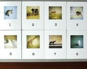 You pick 5 note card set