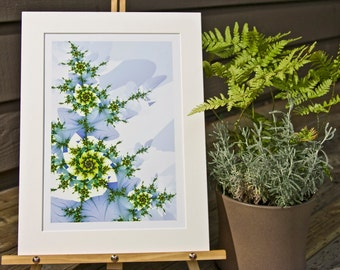 Frost Rose, Matted Fractal Print