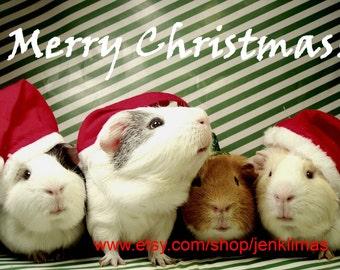 "Playful GUINEA PIG Santa Claus Christmas Gang Photo - Limited Edition 8x10"" Glossy Print"
