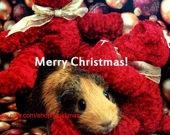 """GUINEA PIG and Red Teddy Bears CHRISTMAS Print - 8x10"""" Limited Edition"""