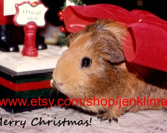 Retro Vintage Style GUINEA PIG CHRISTMAS Portrait Photograph - Limited Edition 8x10 Glossy Photograph