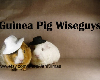 """GUINEA PIG WISEGUYS Funny Mobster Print - Limited Edition 8x10"""" Photograph"""