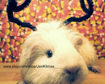GUINEA PIG Insect Bug Funny HALLOWEEN Portrait - Got Any Candy?