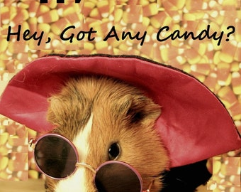 """Sunglass Wearing Guinea Pig Hipster Vampire Portrait HAPPY HALLOWEEN Limited Edition 8x10"""" Glossy Photograph"""