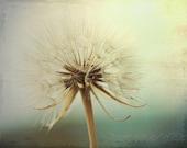 Flower Photo, Fine Art Print, Dreamy, Dandelion Photo, Wish, Teal, Sea Green, Summer, Billowy, Nursery Art, Wispy, Garden, Botanical, Print