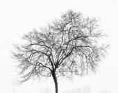 Fine Art Photograph, Black and White Art, Snow, Winter Tree, Stark, Minimalist Art, Landscape, Nature Print, Tree Photo, 11x14 Print - PrettyPetalStudio