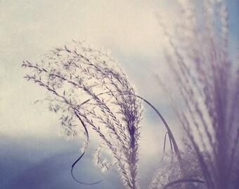 Fine Art Photograph, Feather Grass Photo, Winter, Serene, Botanical Print, Nature Art, Soft, Hazy, Wall Art, Floral Decor, Whimsical Art