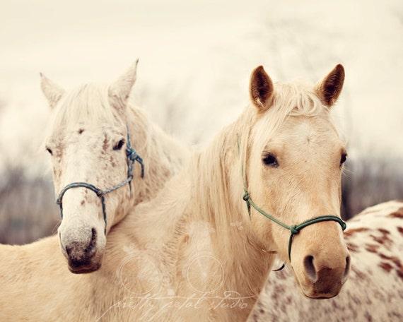 Fine Art Print, Horse Photo, Horse Art, Farm Life, Woodland, Equine Art, Horse Lover, Equestrian Print, Wall Art, Home Decor, Winter White