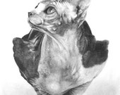 8x10 Sphynx Cat Pencil Drawing Signed Print by Lisandro Pena