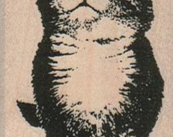 Rubber stamp   Kitten cat unMounted  scrapbooking supplies number 10207