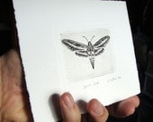 moth original etching butterfly
