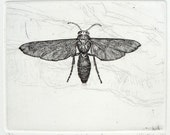 Insect Wasp Original Etching and Engraving