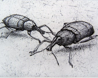 Weevil Twins Etching