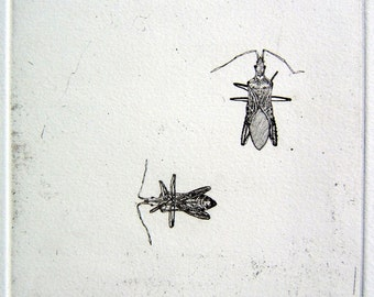 Box Elder Bug etching