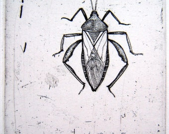 Hand drawn original insect etching