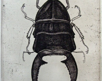 New Beetle Etching