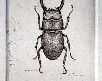 Beetle Etching-hand drawn artwork