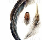 Feather Print - realistic detailed drawing, nature, woodland, birds, rustic