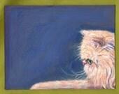 Persian profile postcard Orange kitty cat whiskers fluff