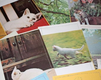 11  white kitten upcycled notecards handsewn vintage images