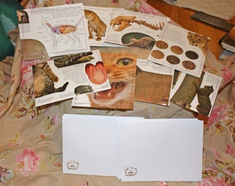 Lets learn about cats stationery set recycled up cycled A2