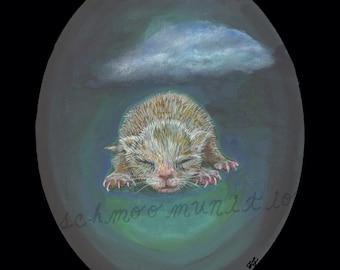 newborn kitten postcard stormy sky