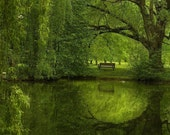 "Green Wall Art, Willow Tree, Park Bench, Landscape photography, Water Reflections, Spring, Peaceful Art,  ""Another Green World"""