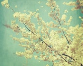 Flower Photograph, Blossoms, Spring, Tree, Nature Photography, Aqua - Kiss the Sky