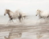 Abstract Horse photograph, Nature photography, White Horses Running, Ghosts, Ethereal, Camargue - Free Spirits