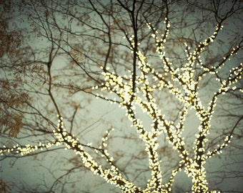 "Tree Photograph, Fairy Lights, Winter Tree Art, Christmas, Gray, Bare Branches, Fine Art Photography ""Everything is illuminated"""