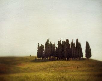 Tuscany Art, Italy Photography, Rustic Decor, Italian Landscape Photography, Cypress Trees, 8x8 Print - Land of Sighs