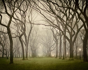 "Large Tree Print, Foggy Landscape Photography, Autumn in Central Park, New York, Tree Art, NYC Art, Poet's Walk, ""Enchanted"""