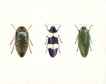 "Insect Print, Minimalist Nature Photography, Garden Art, Modern Wall Decor, Gardener Gift, Spring Decor ""Meet the Beetles"""