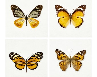 SALE Set of Four Butterfly Prints, Nature Prints, Nature Photography, 5x5 Gallery Wall Art, Wall Decor - The Butterfly Effect