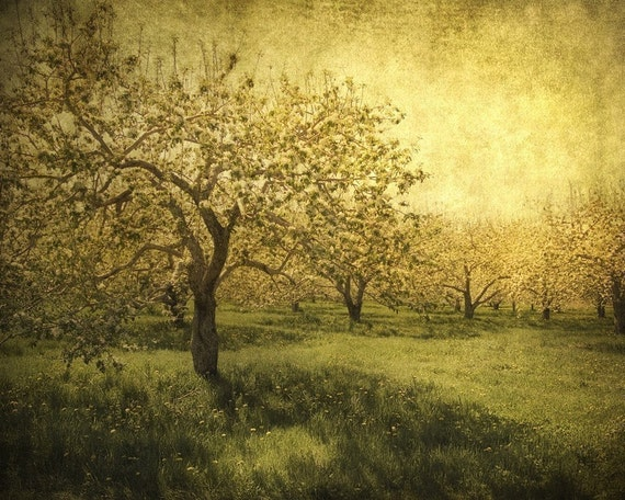 Go ask the blossoming trees  - 8x10 Fine Art Print